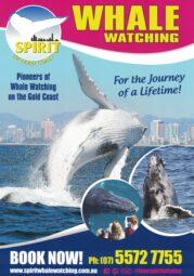 Spirit of Gold Coast Whales A4