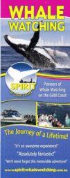 Spirit of Gold Coast Whales